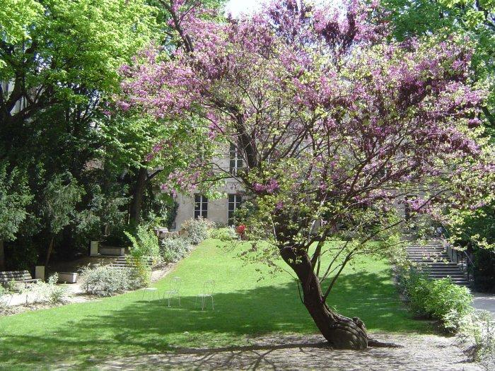 Arbres Pour Petit Jardin