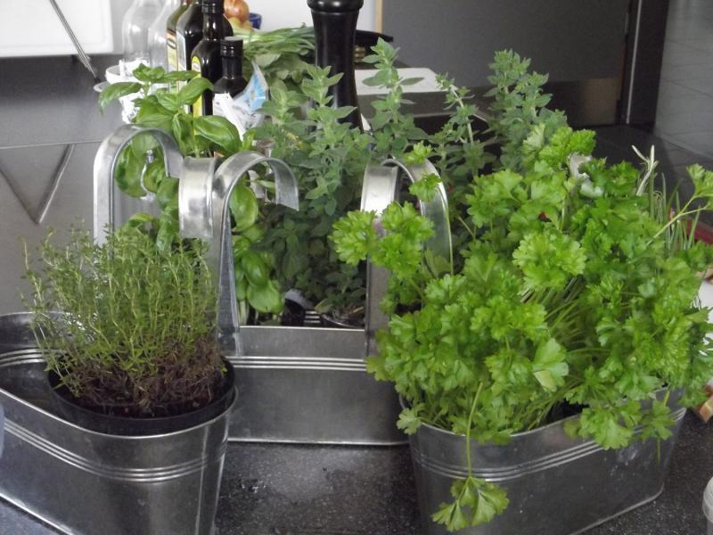 Cultiver Des Plantes Aromatiques En Interieur