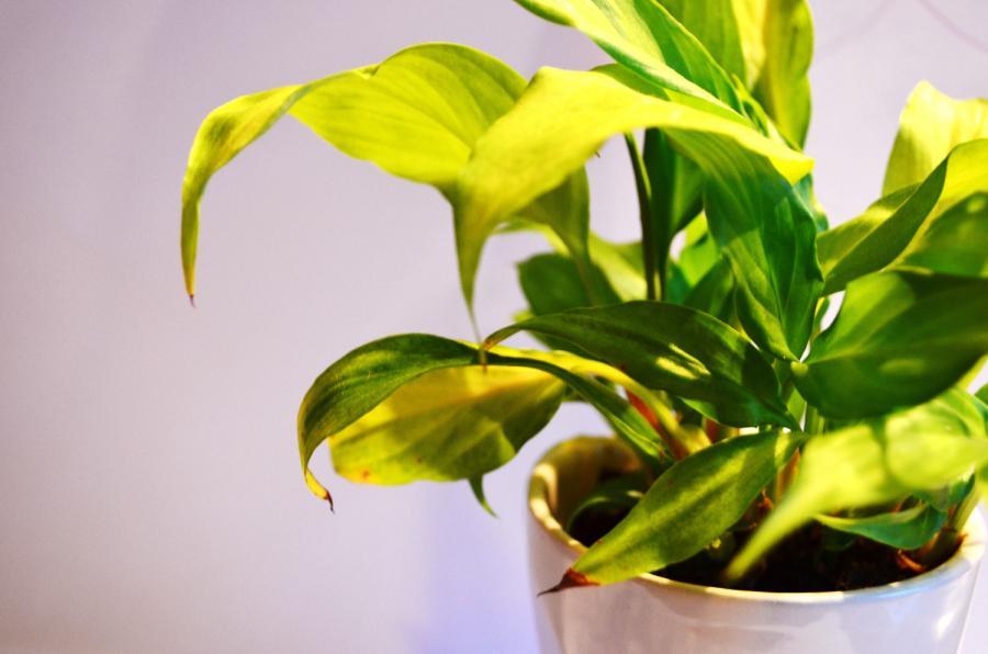 Problemes Frequents Des Plantes D Interieur